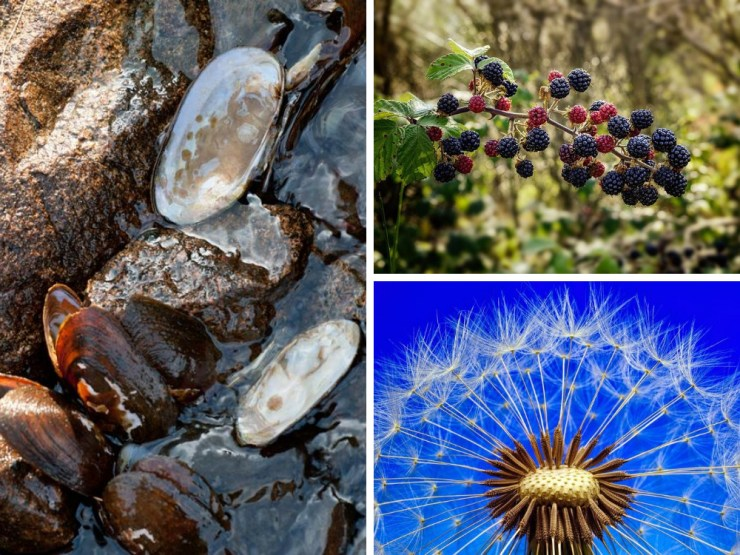 East Coast | Foraging for Wild Edibles Across the Nation