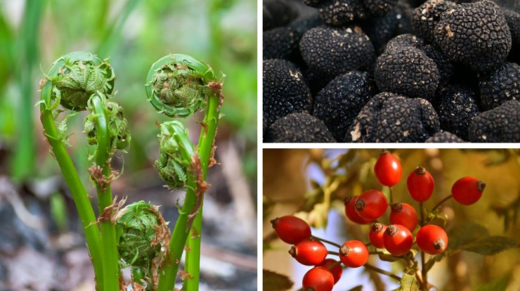 Pacific Northwest | Foraging for Wild Edibles Across the Nation