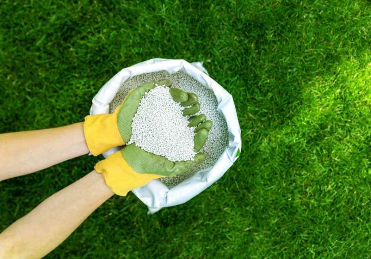 feeding lawn with granular fertilizer for perfect green grass | homemade diy deicer