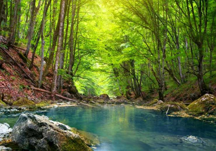 river deep mountain forest nature composition | non potable water signs
