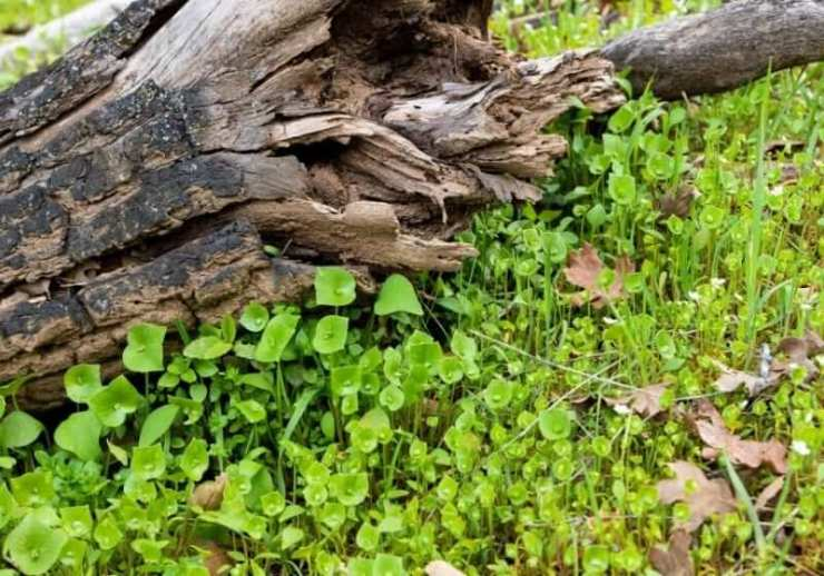 Check out 20 Edible Wild Plants You Can Forage For Survival at https://survivallife.com/edible-wild-plants/