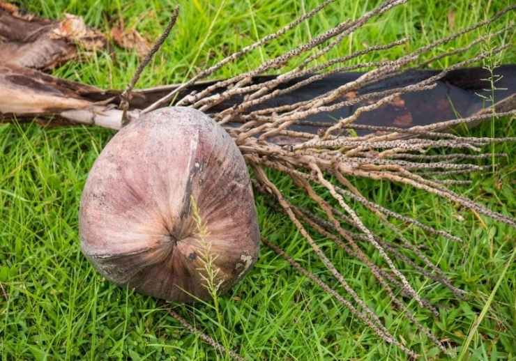 Check out How to Make Your Own Coconut Rope at https://survivallife.com/coconut-rope/