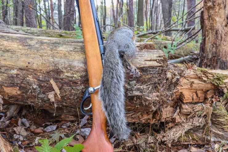 Squirrel hunting | Contents of the emergency bag