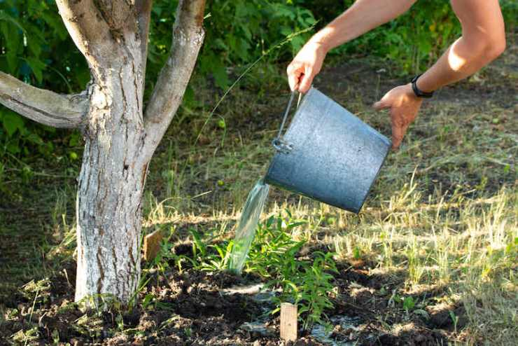 Watering a fruit apple tree in the garden from a metal bucket what to pack in an emergency bag