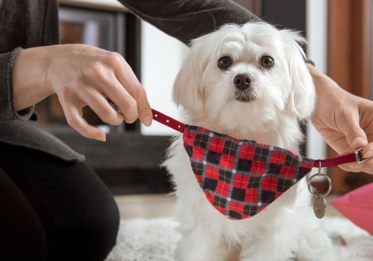 Check out A Pet Emergency Checklist at https://survivallife.com/pet-emergency/