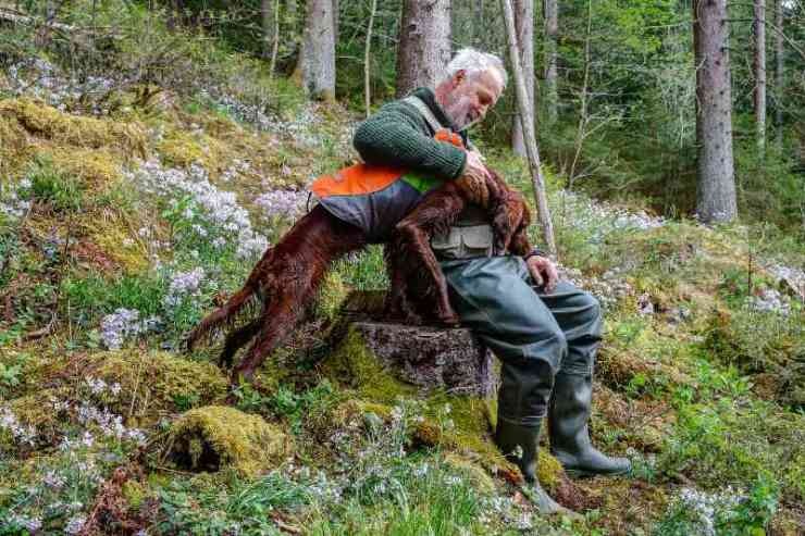 A Hunter sits with his Irish Setter Pointer on a tree stump on a mountain slope-summer hunting