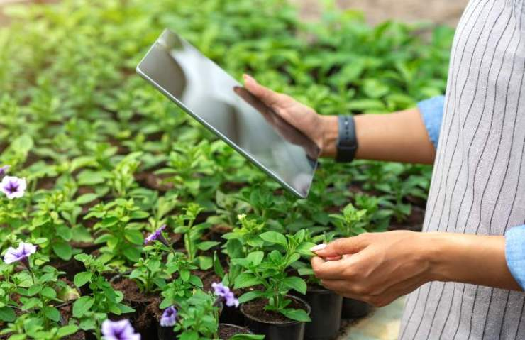 Farm management with tablet. African american girl with smart watch and device, checks quality of plants in greenhouse-seed starting