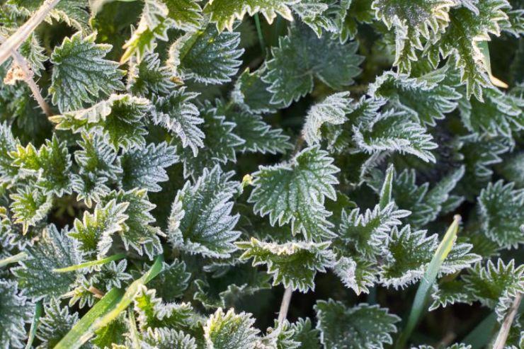 Plant frost | Gardening