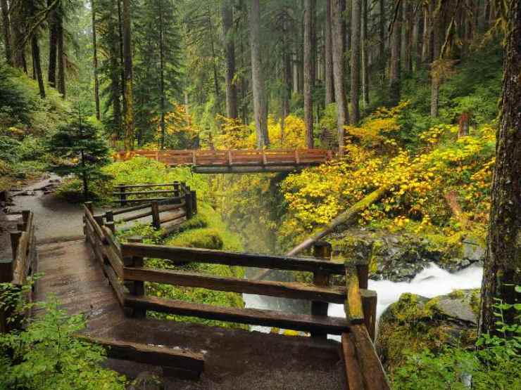 Trekking-is-one-of-the-most-popular-activities-in-The-Hoh-Rainforest-Olympic-National-Park-best-hiking-trails