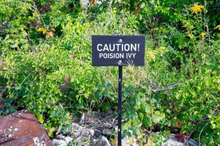 Caution poison ivy sign-Common Poisonous Plants