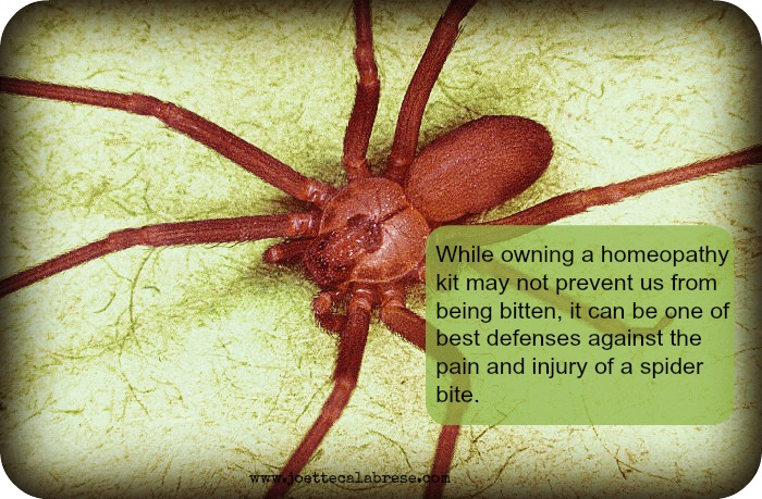 Yikes a Spider Bit Me! Not to Worry When You Have Homeopathy