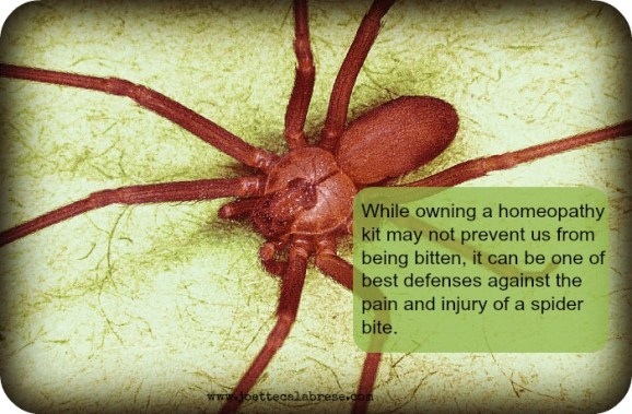 Brown_recluse_spider _2