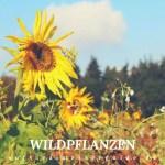 5 Essbare Wildkräuter Bücher, die in keinem Haushalt fehlen dürfen