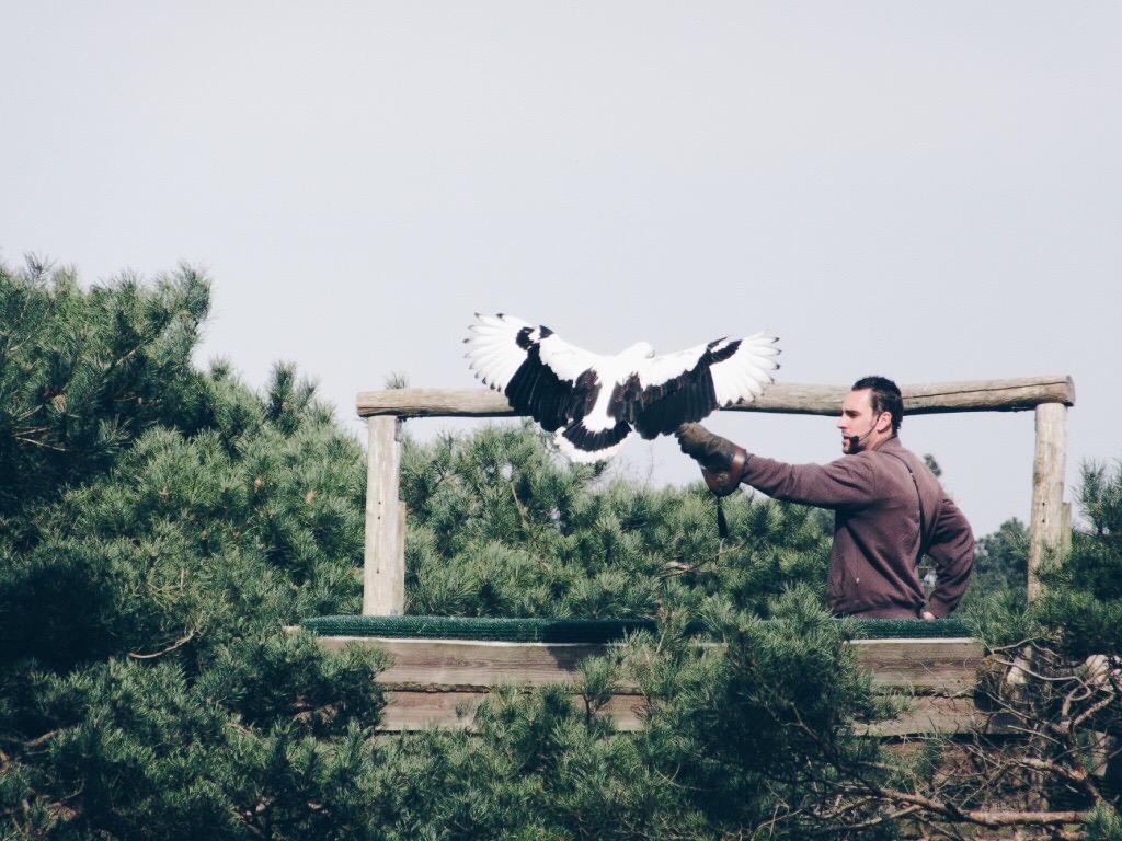 Roofvogel met presentator