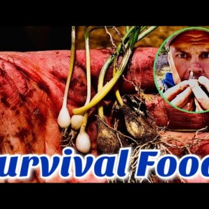 Survival Food - How to Find and Harvest the Easiest Wild Food! - Wild Onion!