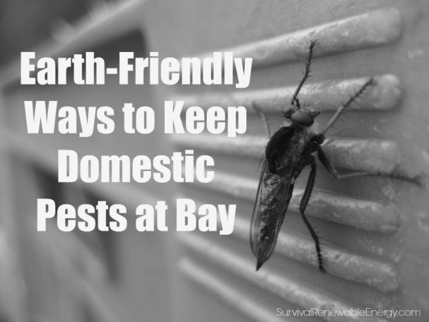 Earth-Friendly Ways to Keep Domestic Pests at Bay