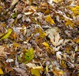 leaves mulch