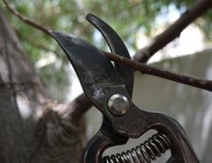 Tijeras de podar cortando una rama
