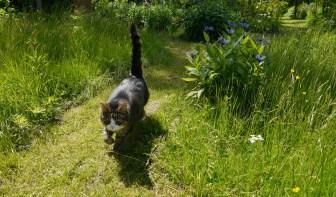Äntligen är Mio i sin trädgård...
