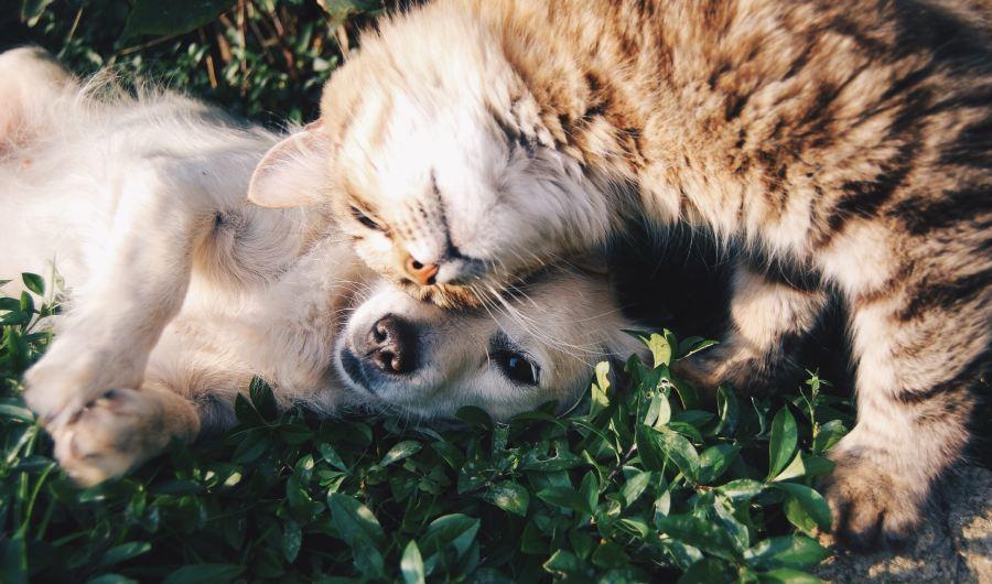 catanddogcuddling