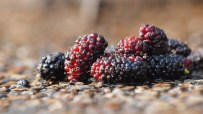 History of Blush - Mulberries