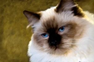 baby-blue-eyes