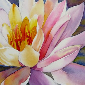 Water Lily – Image © Susan Bartel. All Rights Reserved.