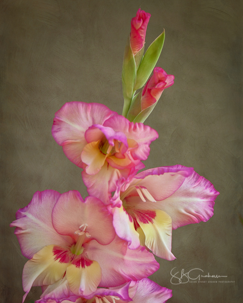 Gladiolus and Sunday Thoughts