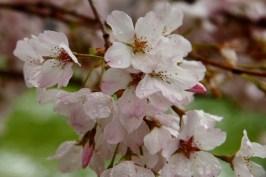 Spring Snow 4