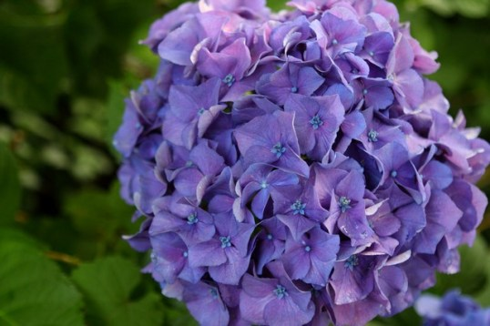 06.13.2012_Pretty Flowers_0002_BW_small