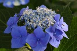 06.13.2012_Pretty Flowers_0004_BW_small