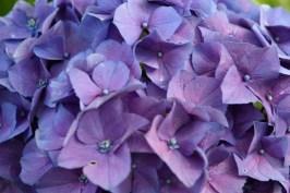 06.13.2012_Pretty Flowers_0007_BW_small