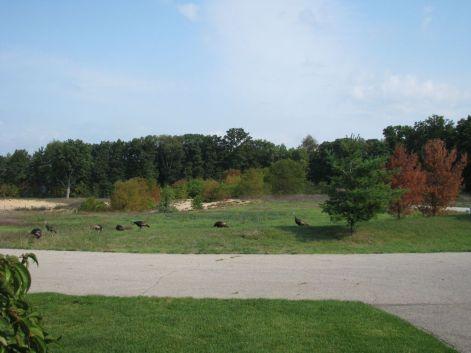 Landscape of Sawgrass Condominiums in Holland, Michigan