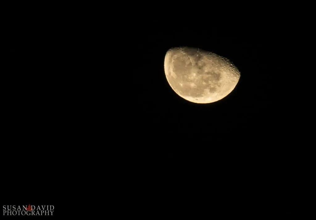 Waning-Wolf-Moon-1024x714-1.jpg