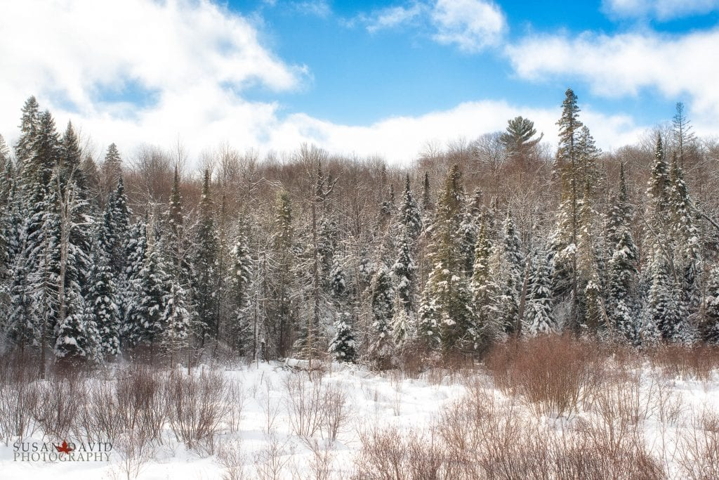 Snow Dusted-Edit