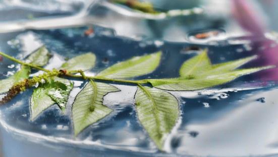 Pecan Leaves in the Rain