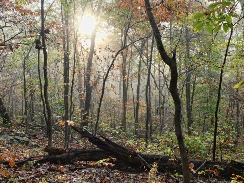 The scenery is magical along the Ozark Highlands Trail