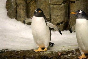 Montreal_BioDome_Penguin