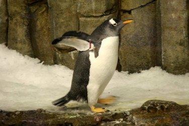 Montreal_BioDome_Penguin_02
