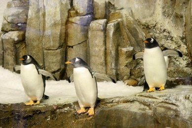 Montreal_BioDome_Penguin_03_tresamigos