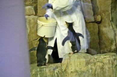Montreal_BioDome_Penguin_feeding