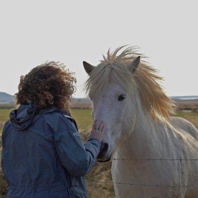 Lovely white Icelandic horse saying hello to one of our tour companions
