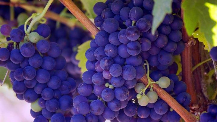 When you flourish, you bear fruit for the Kingdom