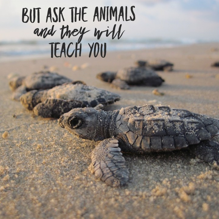 But ask the animals and they will teach you