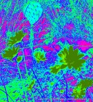 Heat Map of Wildflowers and Cactus at Torrey PInes State Reserve