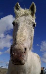 Grandfather Horse Spirit 26