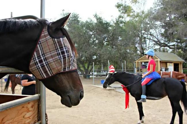 Horse halloween costume ideas saddle seeks horse solutioingenieria Image collections
