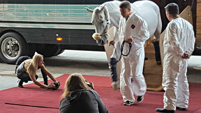 horses arrive for #LIVEMasters