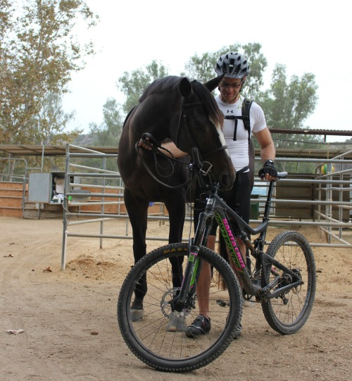 patience with my horse and human