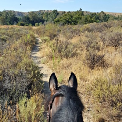 southern california trail ride saddle seeks horse